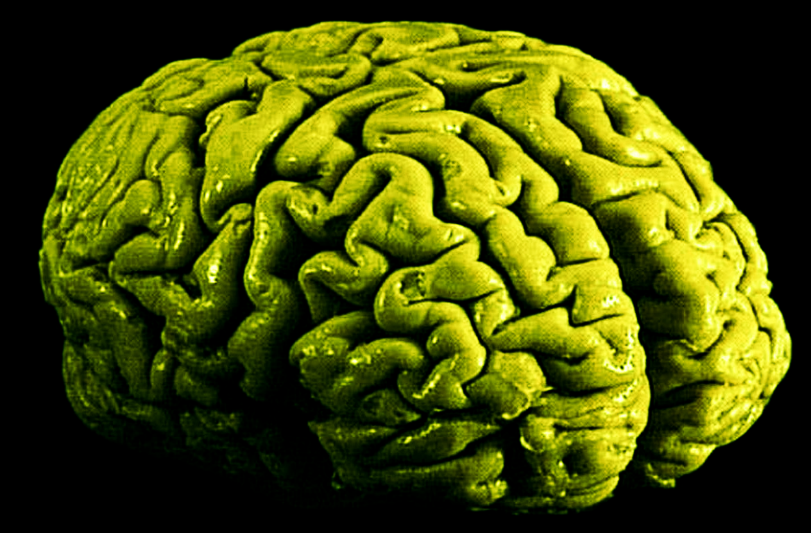 longterm marijuana use changes brain at the cellular