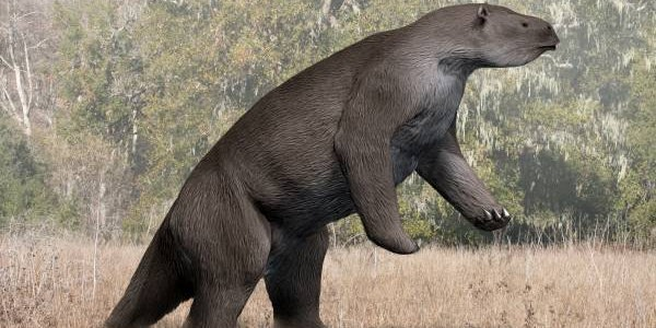 Ancient Giant Sloth Bones Reveal the Unexpected Culprits in Their Extinction
