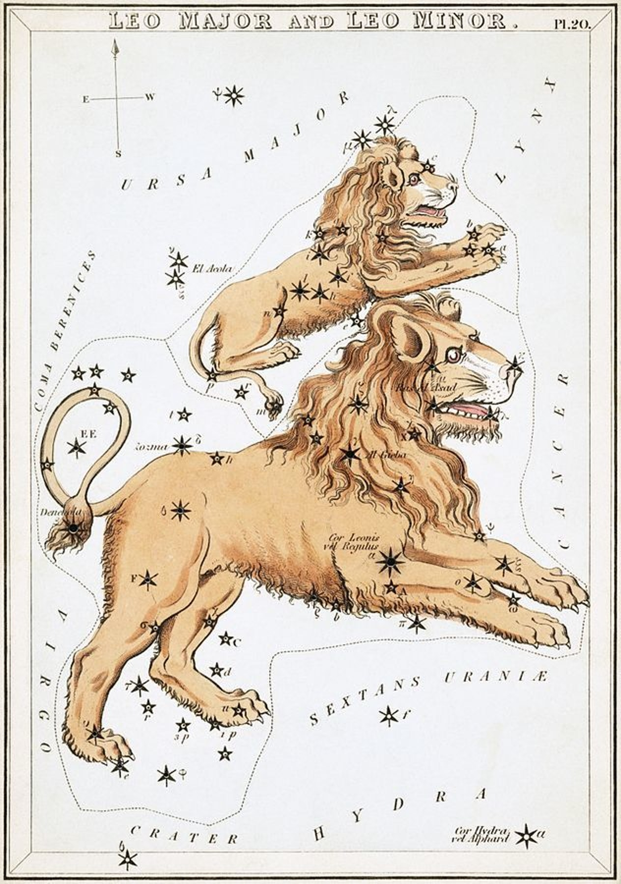 """Today in """"Most bizarre ways to draw a lion's face"""""""