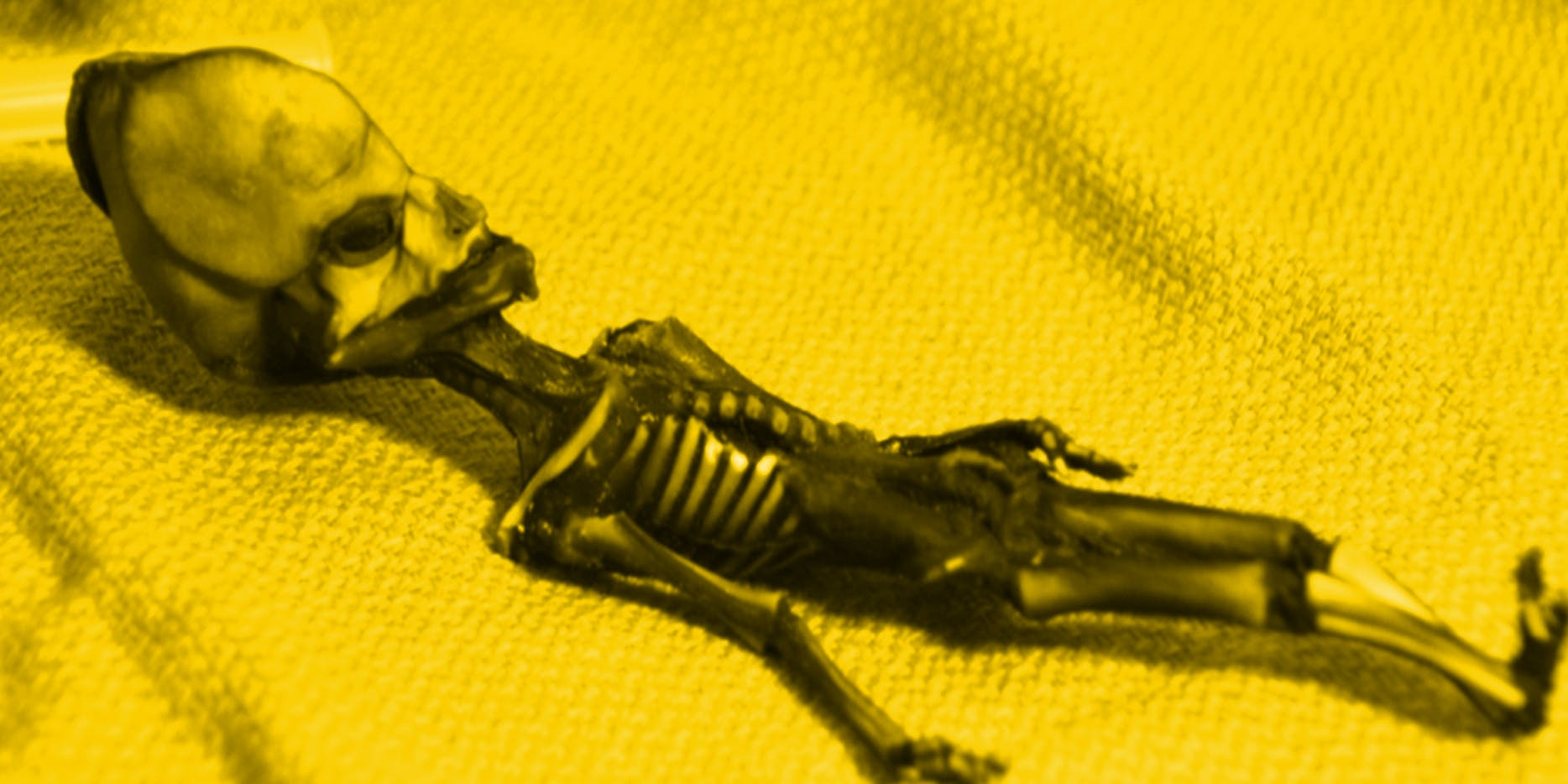 atacama alien skeleton
