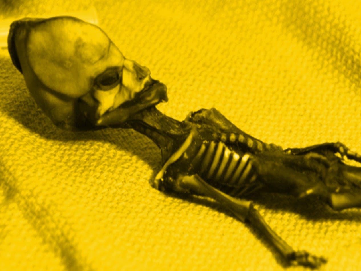 atacama alien skeleton