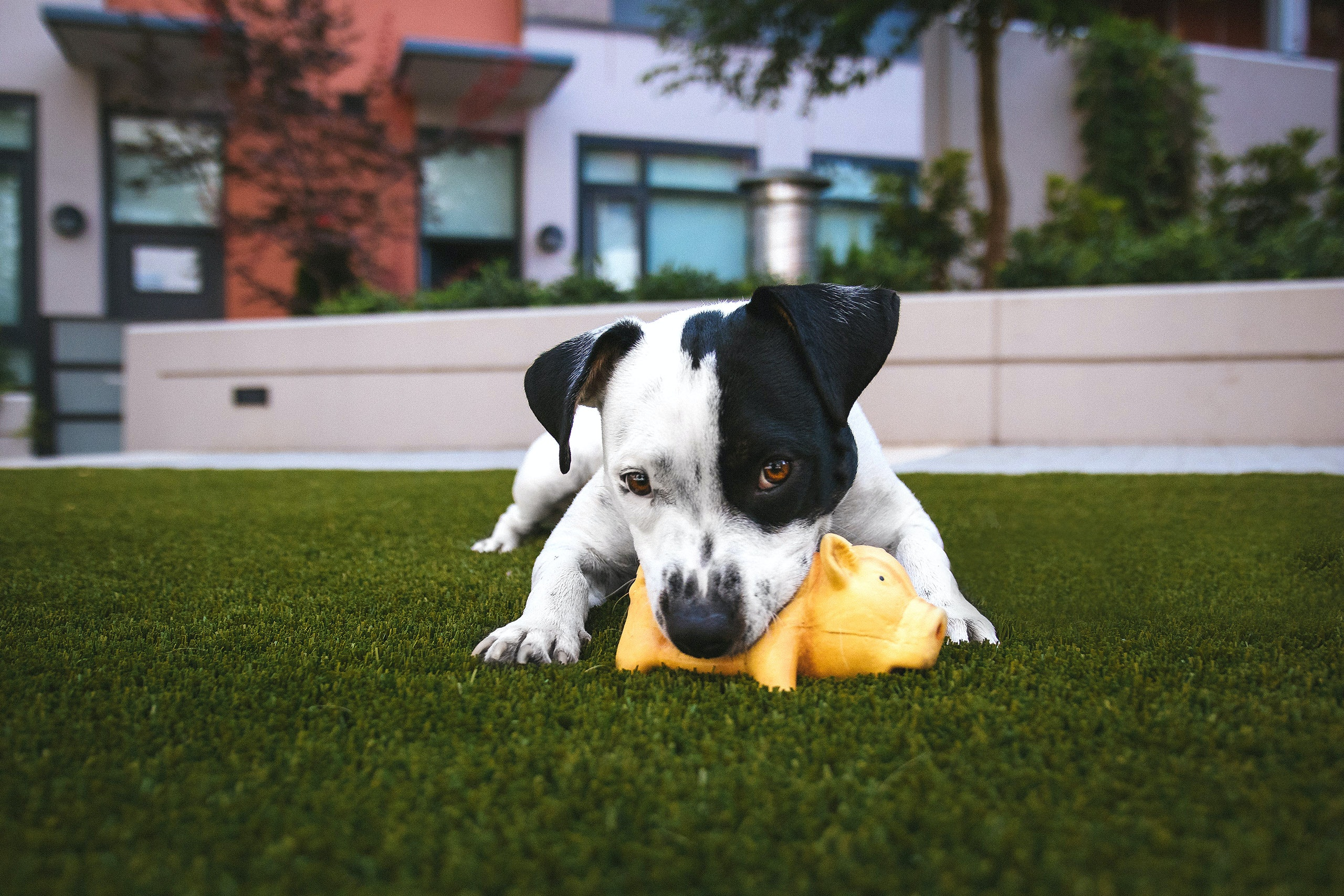 What pet products can you buy online? 53