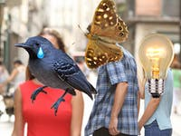 moth tear lamp distracted boyfriend meme