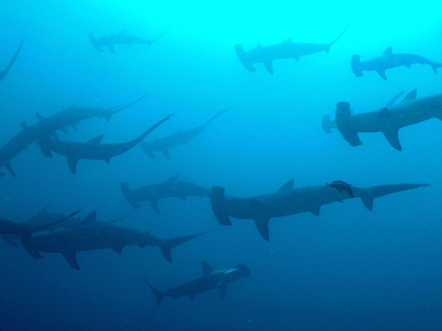 How 'Shark Week' Hacks the Biology of Fear