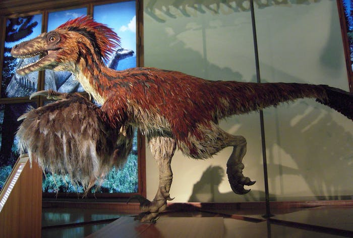 dinosaur feathers reconstruction