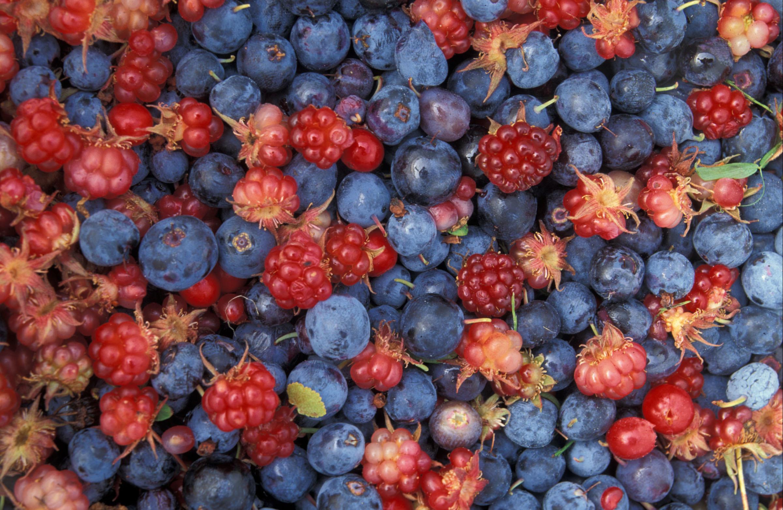 Alaska Wild Berries.