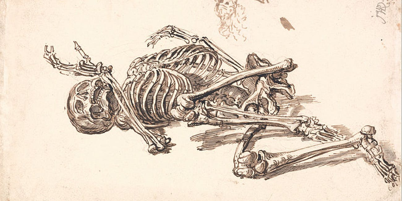 bones, skeleton