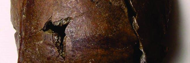 The early Holocene Aitape frontal bone.