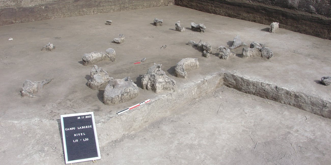 Giant ground sloth bones at the Campo Laborde site in Argentina.