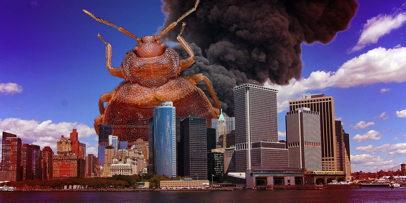 This Freaky Bed Bug Species Can Escape Traps and Scale Walls
