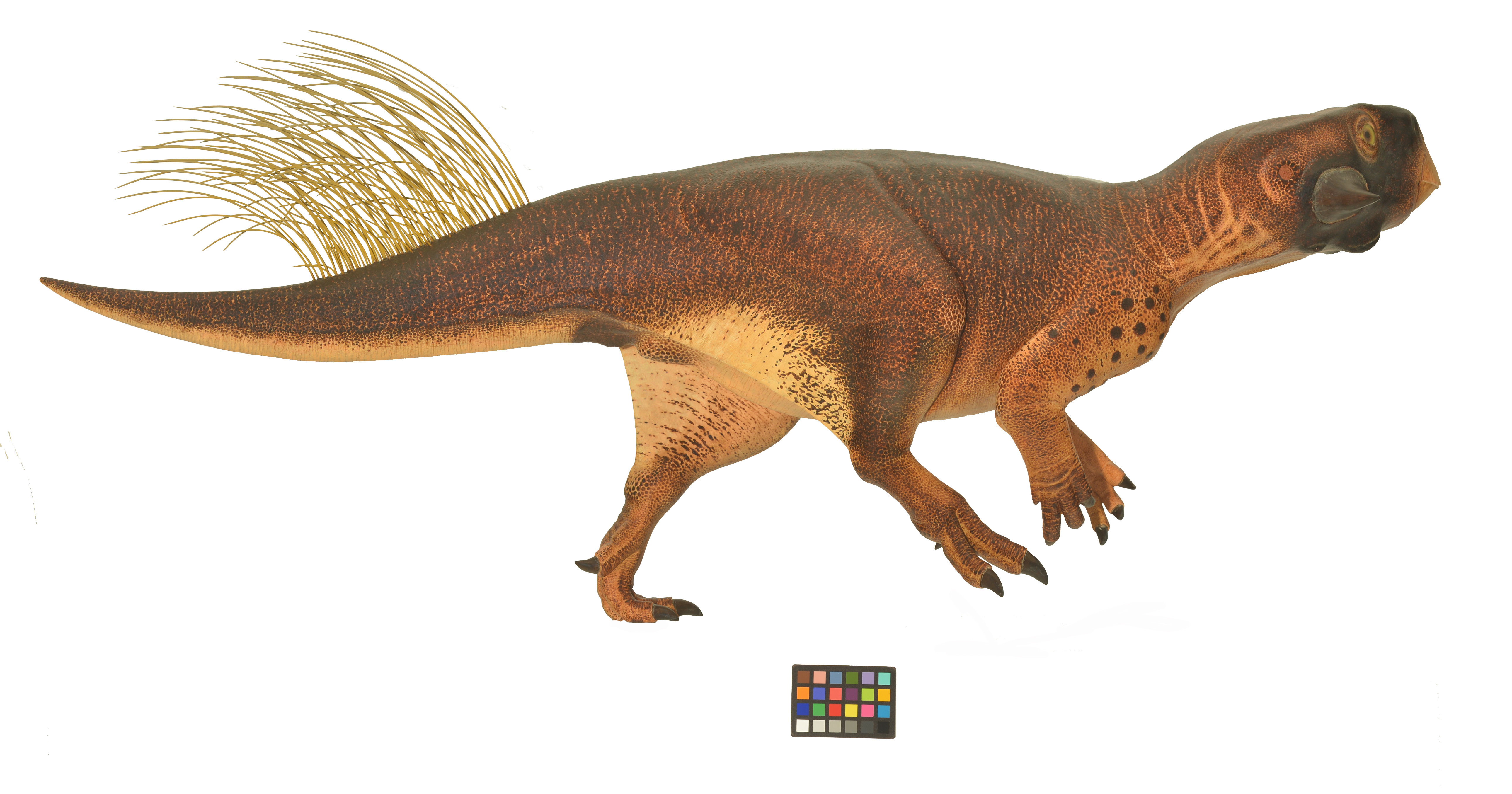 we u0027re on the verge of knowing what color t rex is inverse