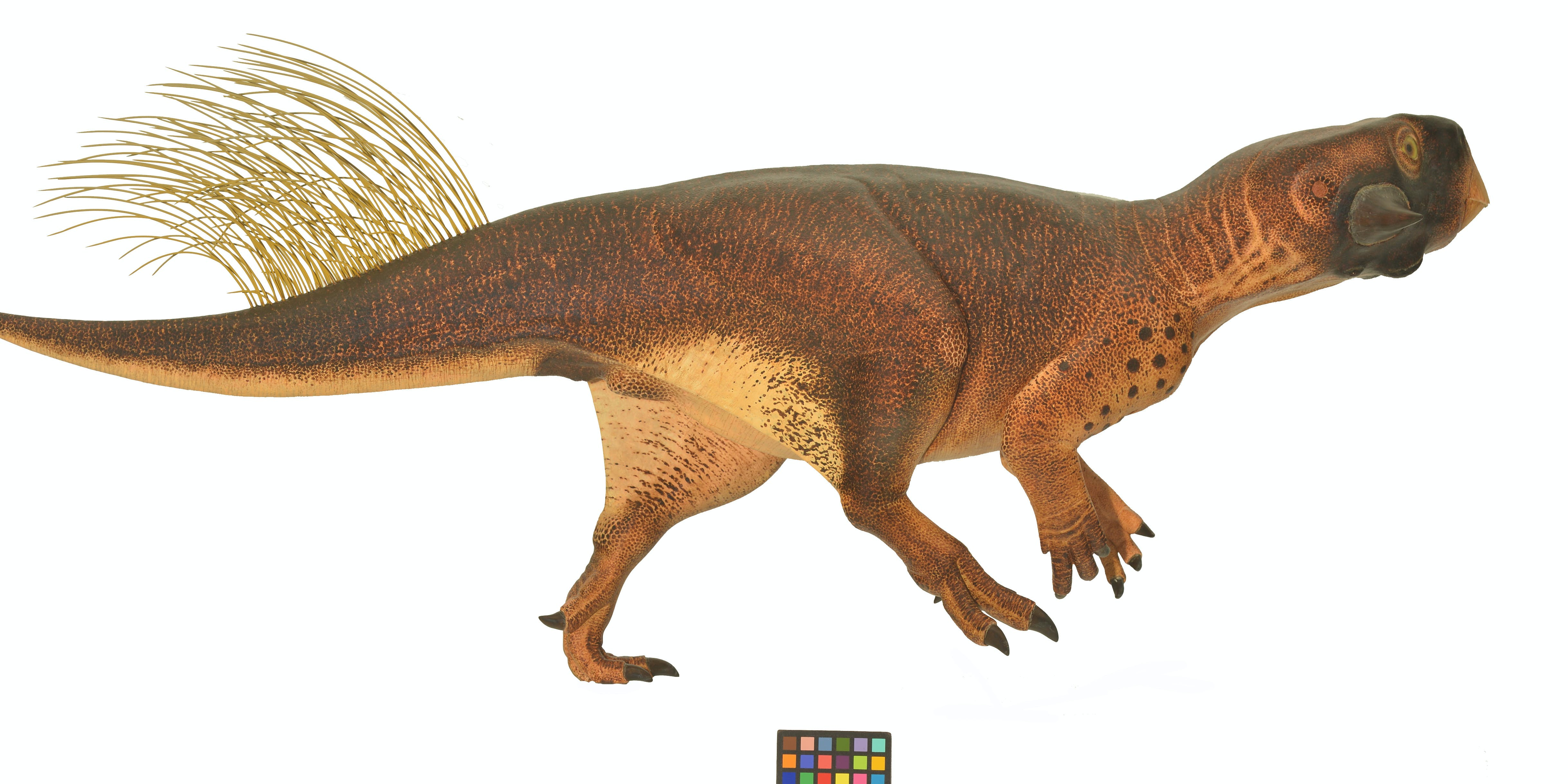 We Know What Color Dinosaurs Were