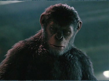 'War for the Planet of the Apes' Promises Apes vs Humans Clash
