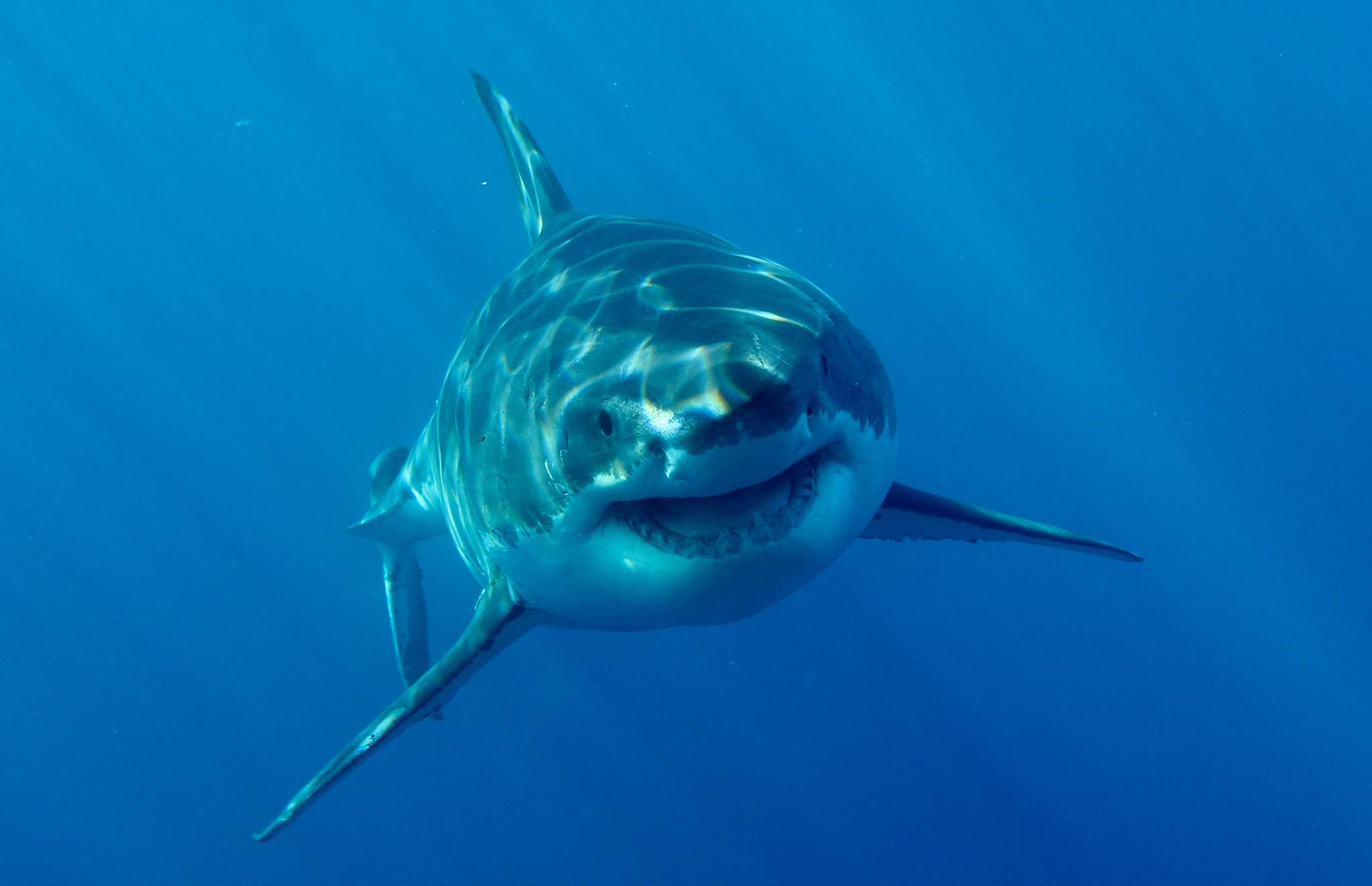 the 7 celebrity sharks you should follow on twitter inverse
