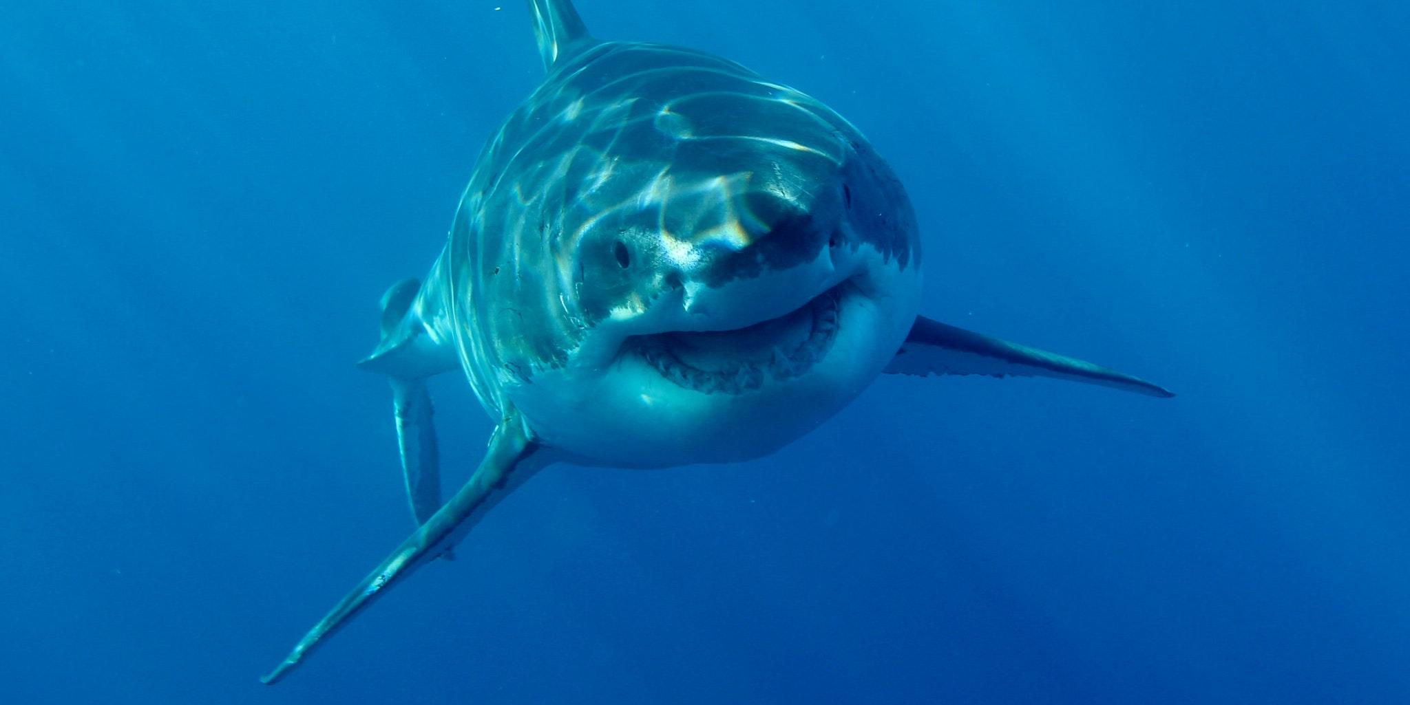 Image result for Twitter sharks