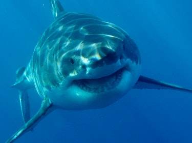 The 7 Celebrity Sharks You Should Follow on Twitter