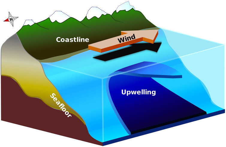Upwelling brings cold, nutrient-rich water to the surface along coastlines.