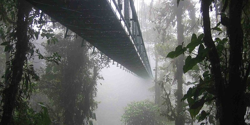 """In Earth's Vanishing Cloud Forests, """"Many Species Are Going to Be Lost"""""""