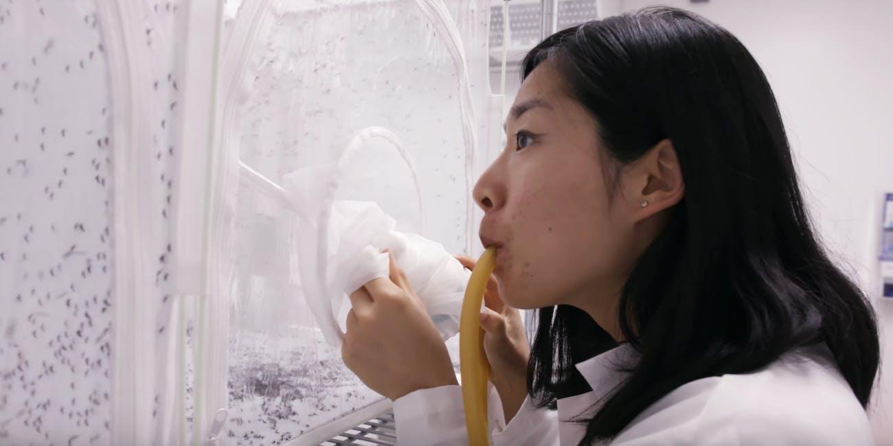 mosquito scientist