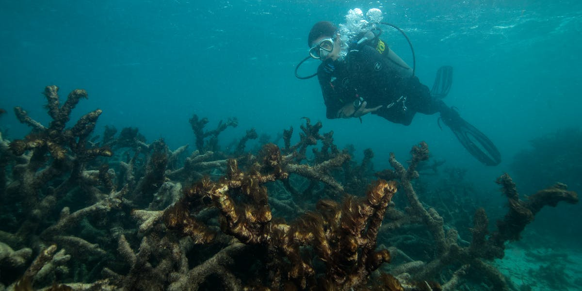 A scuba diver surveys dead coral covered in algae, captured by The Ocean Agency / XL Catlin Seaview Survey at Lizard Island on the Great Barrier Reef in May 2016.
