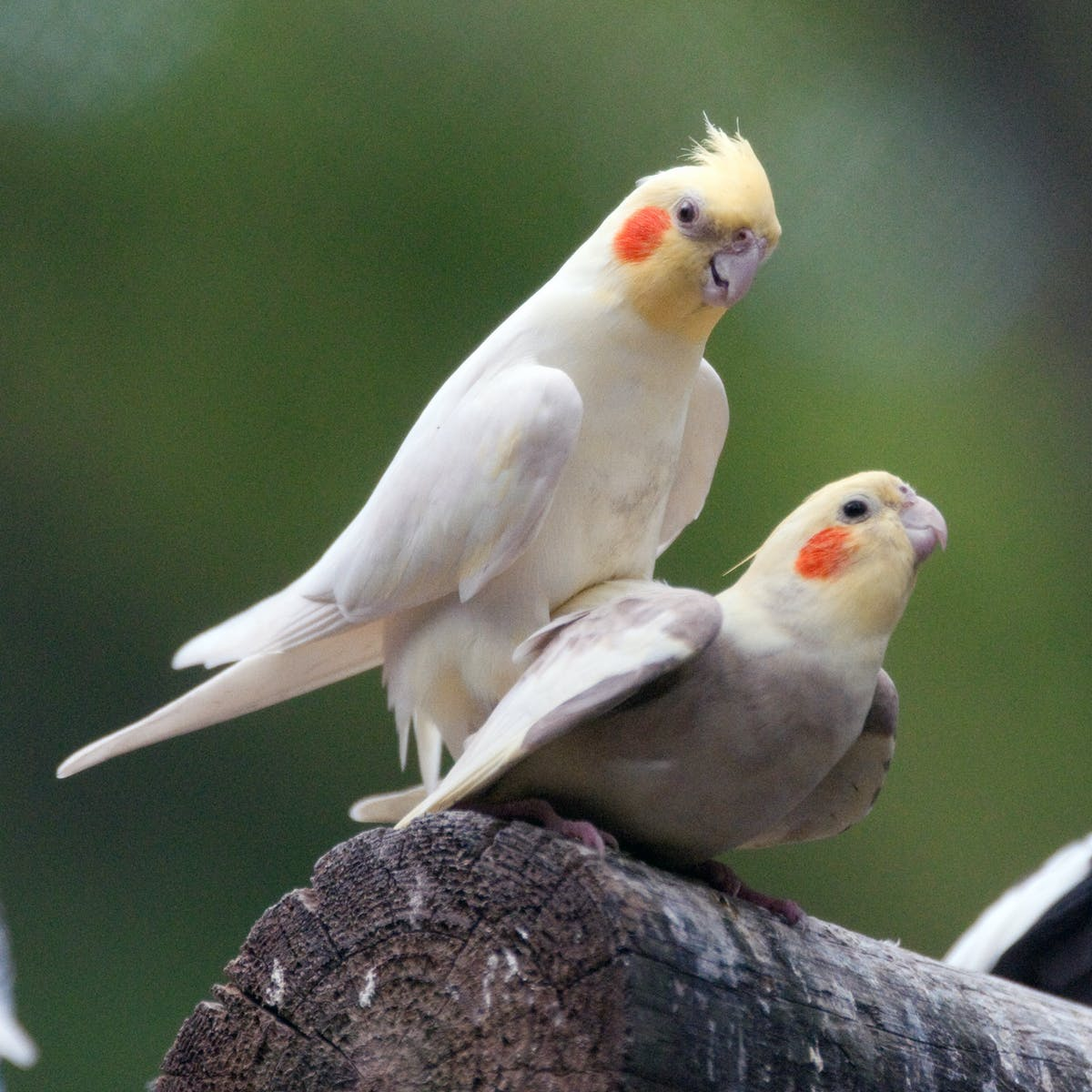 When male birds keep it interesting in the bedroom, both partners benefit