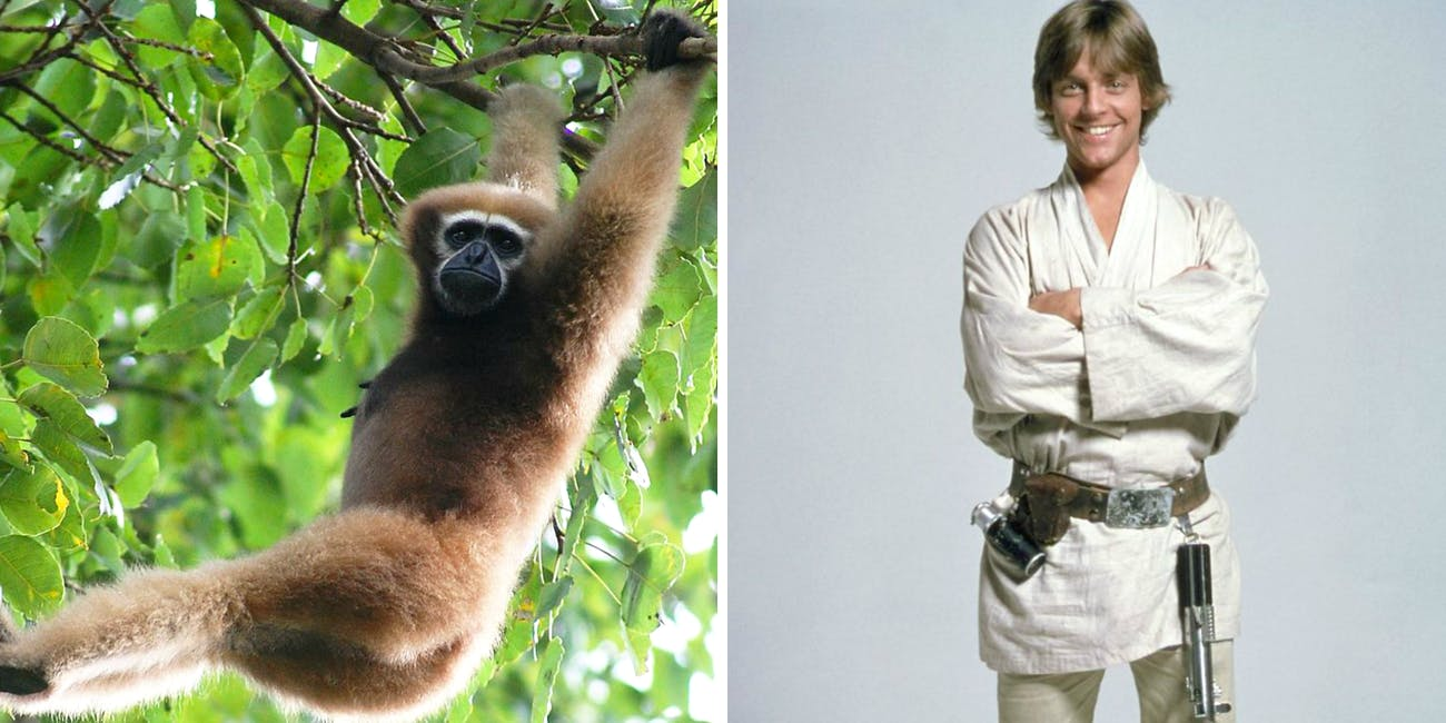 Researchers name a new species of monkey after Star Wars.