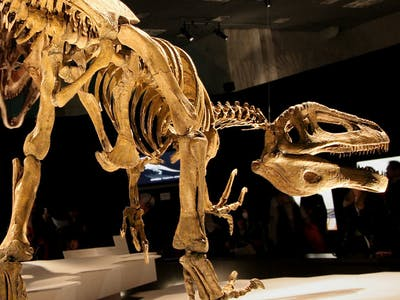 """""""Giant Thief"""" Dinosaur Discovery Deepens Megaraptor Mystery"""