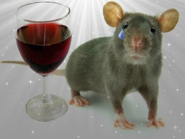 Lab Full of Scared, Drunk Mice Teaches Humans to Cope