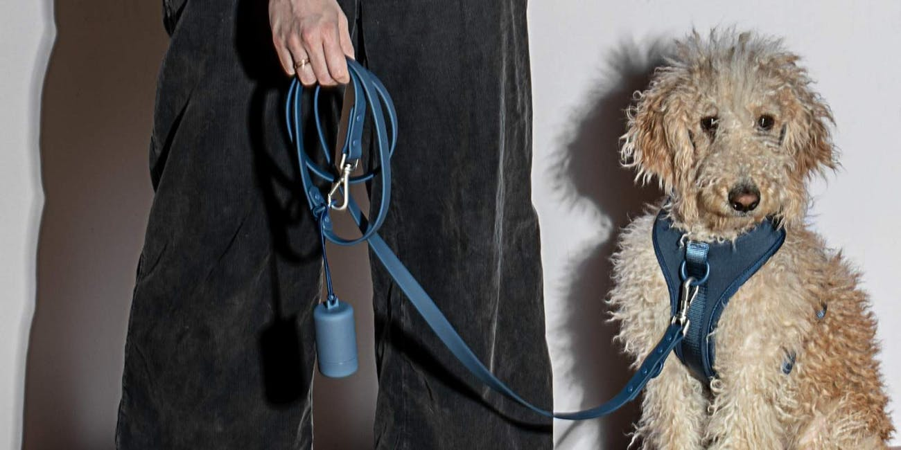 Make Walking Your Dog Easier With These Kits