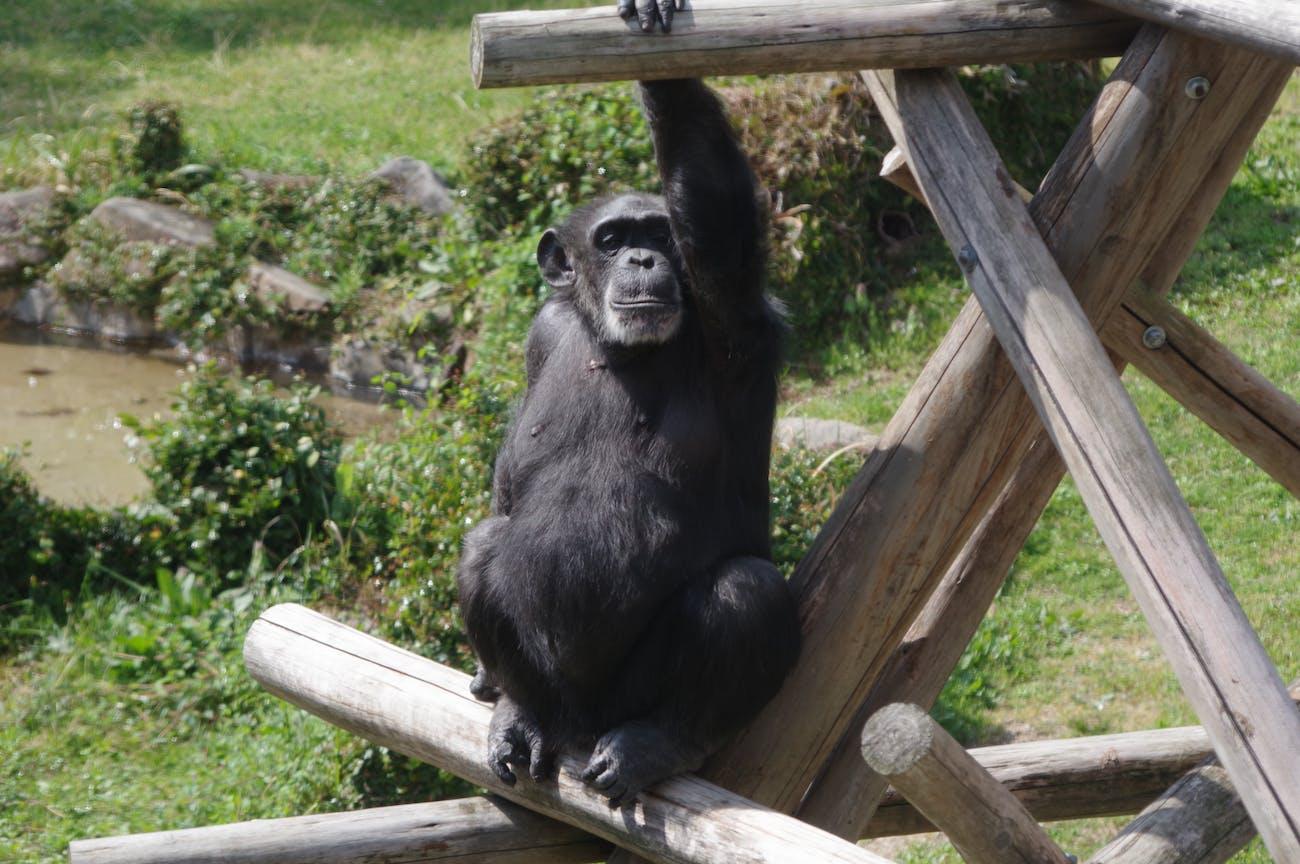 Oji zoo, Kobe, Japan