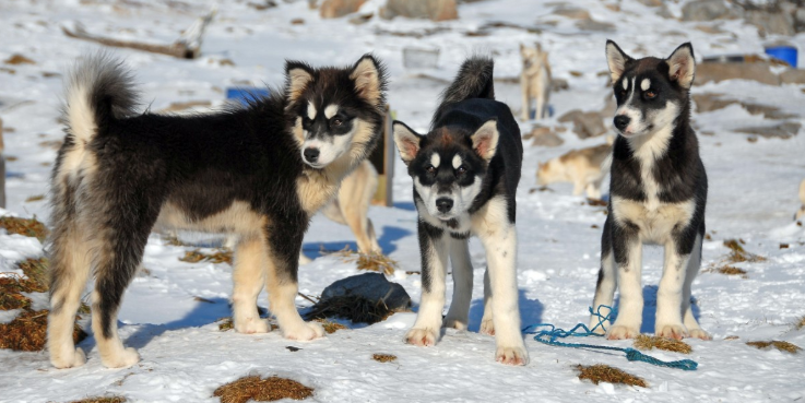 The Dogs of America Were Not Descended From Wolves, Scientists Reveal