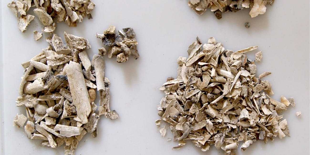 Even cremated bone fragments still retain clues about the people they belonged to.