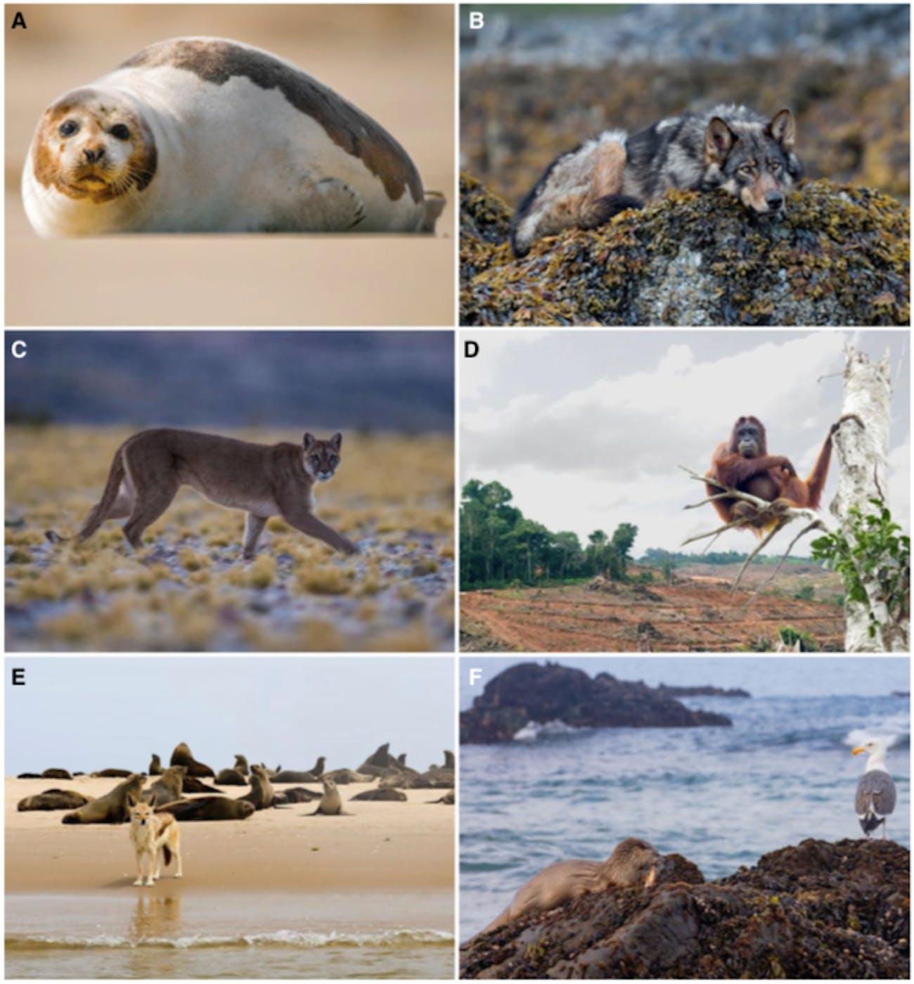 large-bodied predators in unexpected habitats