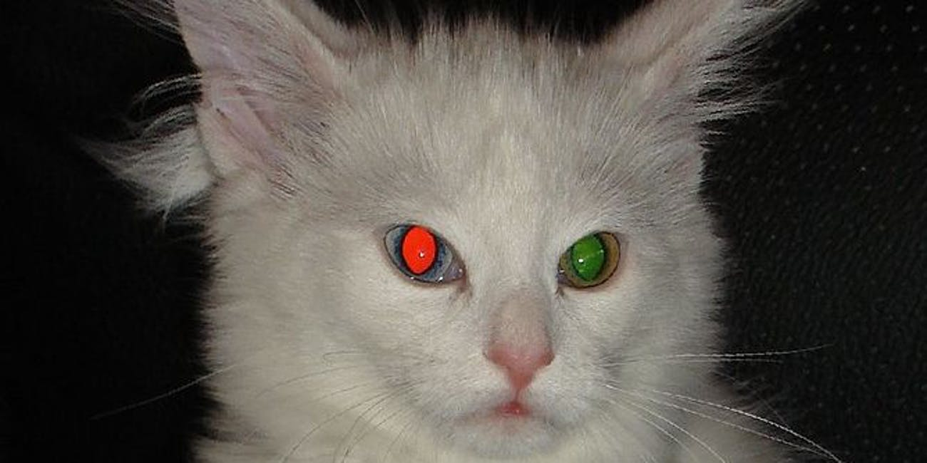 cat eyeshine