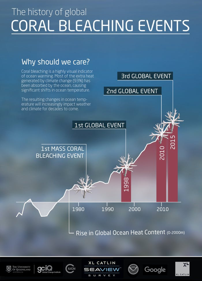 Infographic 2 © The Ocean Agency / XL Catlin Seaview Survey coral bleaching