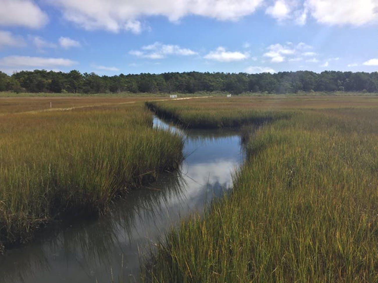 Saltwater wetland, Waquoit Bay Estuarine Research Reserve in Massachusetts.