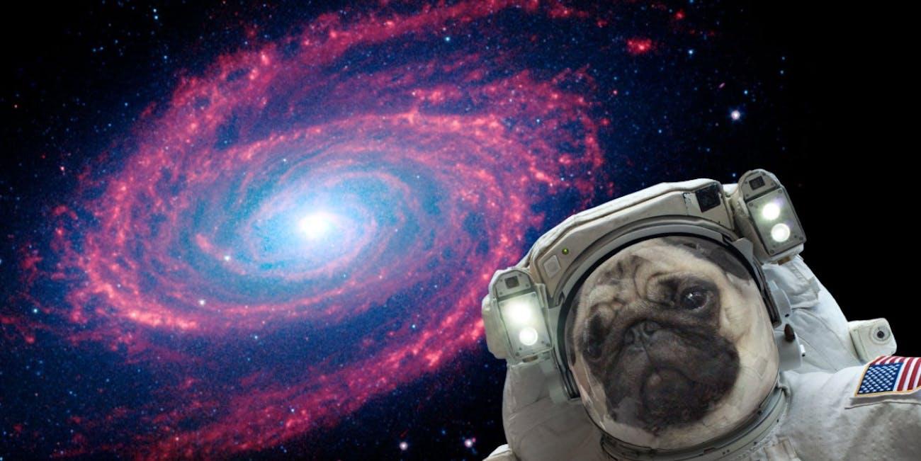 NASA Selfies: Clyde explores the Messier 81