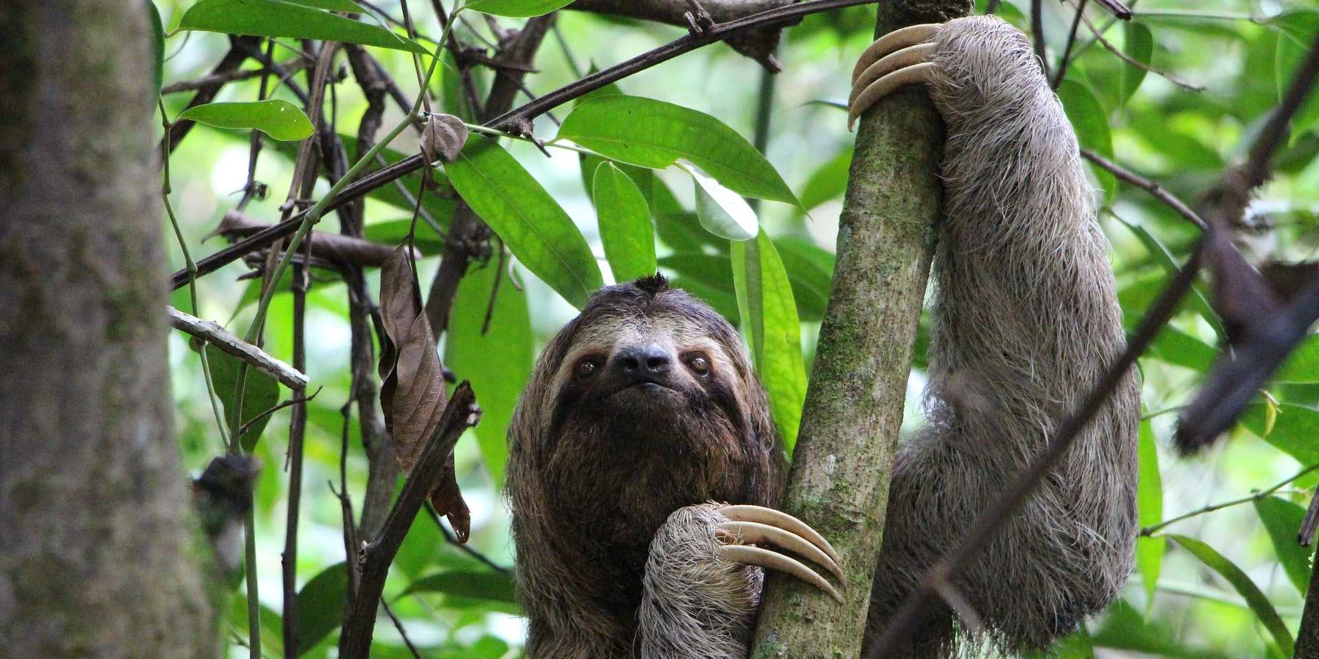 """How Slow, """"Stupid"""" Sloths Managed to Survive for 64 Million Years"""