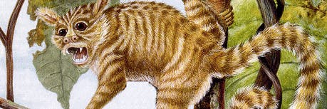 45 million-year old primate had very small bones.