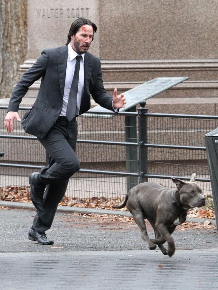 'JOHN WICK 2' DOG SET PHOTOS