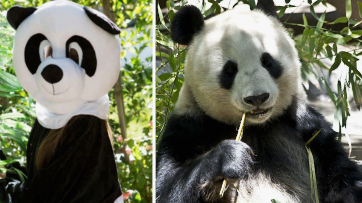 Animal Fur Porn pornhub requests public help to save pandas with bear porn