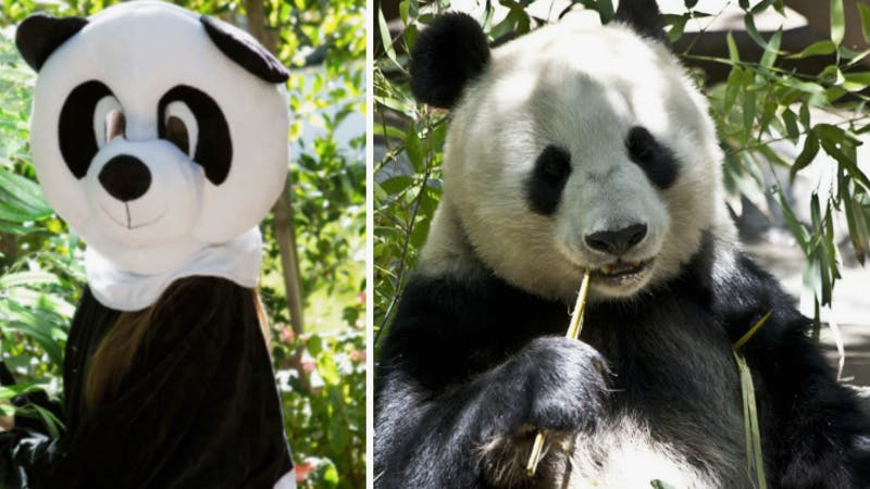Pornhub Requests Public Help To Save Pandas With Bear Porn Inverse