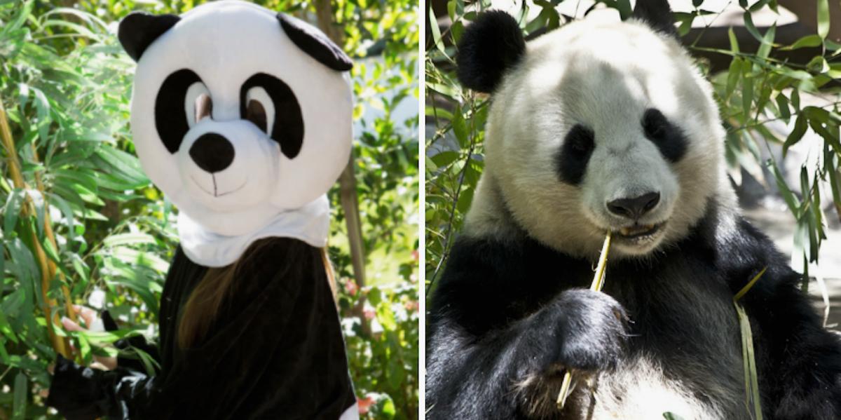 Panda style porn