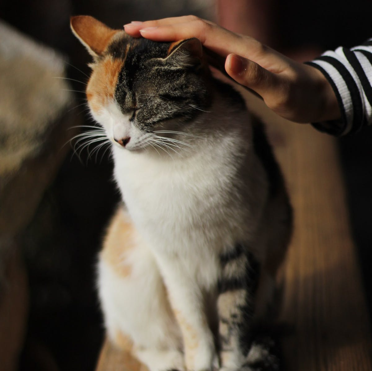 Pet Science: Why You've Been Petting Your Cat Wrong This Whole Time