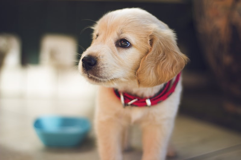 7 of Our Best Eco-Friendly Picks for Cleaning Up After Your Puppy