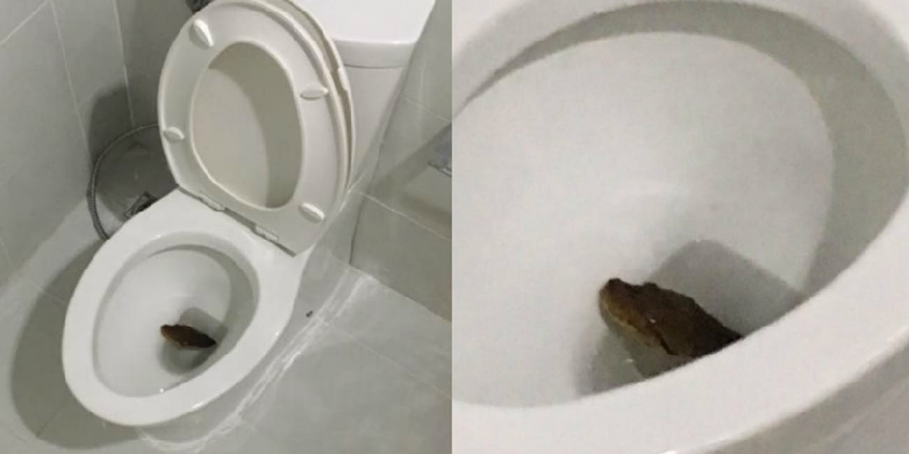 Why are Snakes Showing Up in People\'s Toilets in Bangkok? | Inverse