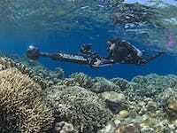 Coral Reef A.I. Artificial Intelligence