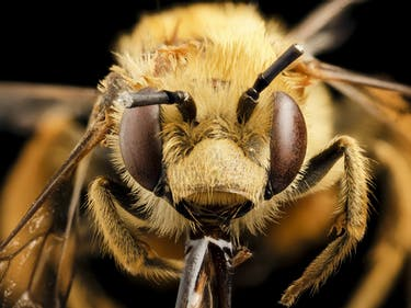 Here Are the Most Beautiful Macro Pictures of Bees You've Ever Seen