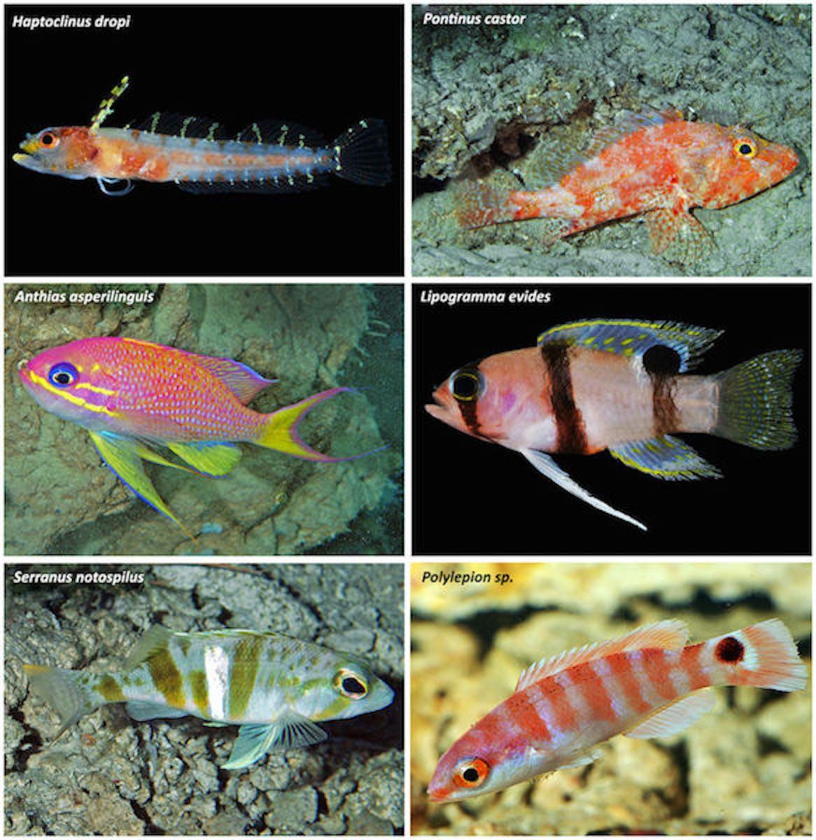 fish, Caribbean