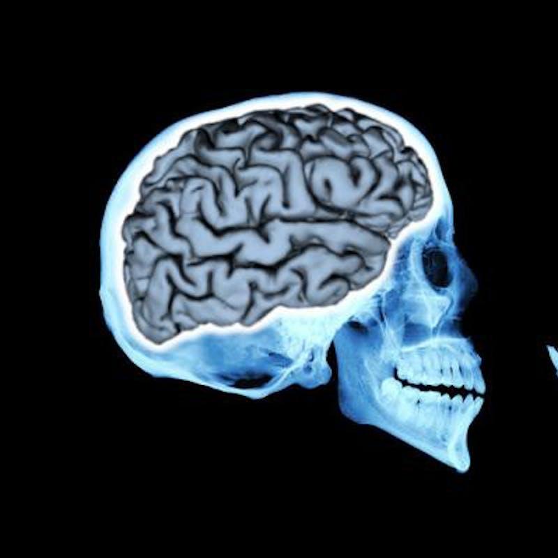 human brain size grew 200 percent in 3 million years inverse